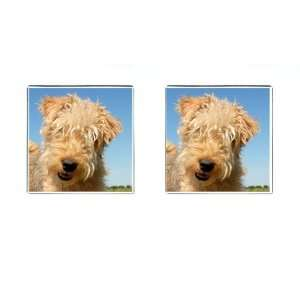 lakeland terrier Puppy Dog Square Cufflinks F0716